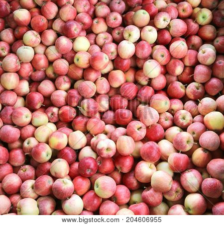 Background Of Red Organic Apples Ready To Eat