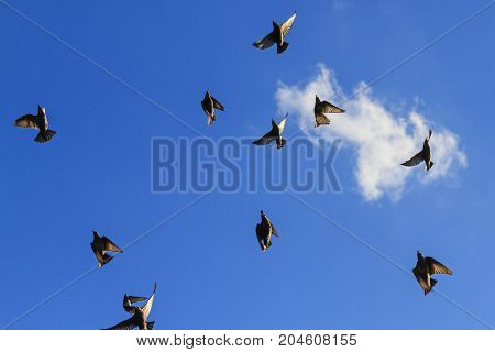 starlings flying in the blue sky minimalist painting , wildlife, unique frames