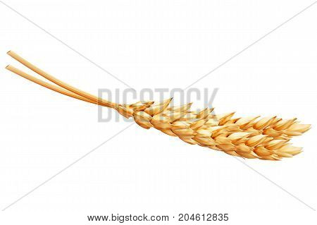 Realistic ear of wheat on white background. Vector set