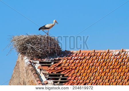 Parent stork stands in nest on building with blue sky