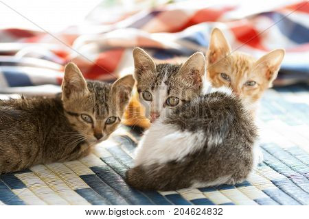 kitty triple on mat - Stock Image