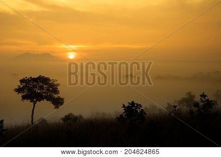 sunrise and mist on hill - Stock Image