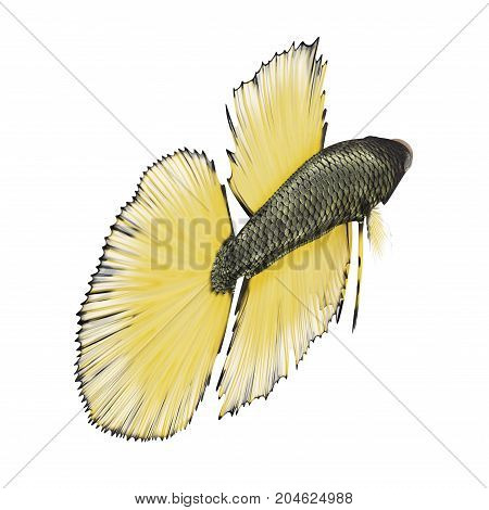 Betta Fish on a white background. 3D illustration