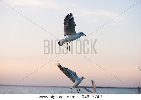 gulls flying, gulls on the background of the sea, on the beach, sunset