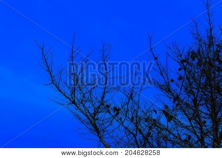 Halloween day background and silhouette tree in sky evening twilight time beautiful