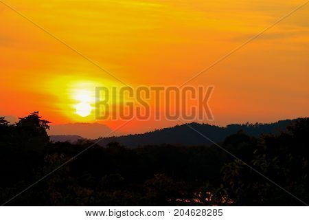Halloween day background with sunset in sky and silhouette tree evening nature twilight time beautiful