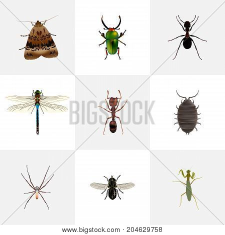 Realistic Ant, Midge, Spider And Other Vector Elements