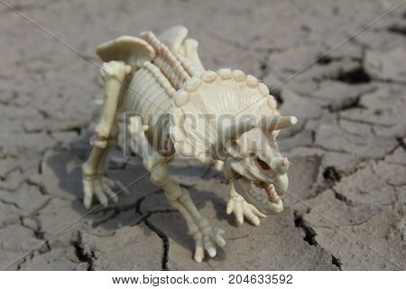 Dinosaur skeleton of Triceratops on parched ground./ This is skeleton of Triceratops - toy.