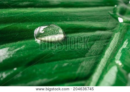 Close up of rain drop on natural green leaf background