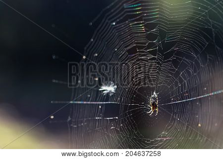 Spider On A Web In An Autumn Forest.