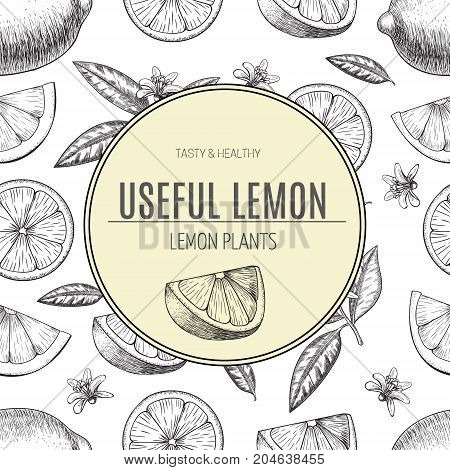 Seamless pattern hand drawn lime. Whole , sliced pieces half, leave sketch. Fruit engraved style illustration. Detailed citrus drawing. Great for water, detox drink, natural cosmetics