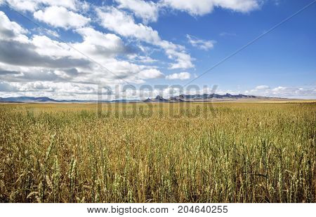Vast fields and meadows of Northern Mongolia