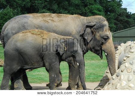 Mother and child Elephant seem to share a joke