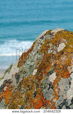 Lichen on a rock by the sea