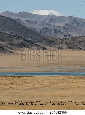Landscape of mountains and yellow steppe in West Mongolia