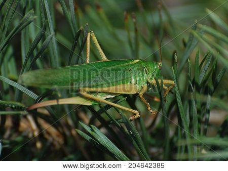 A Grasshopper sat on blades of grass