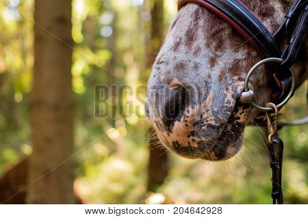 Part of horse face. Big nose and nostrils on background of trees