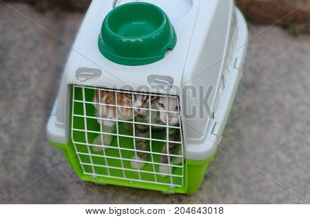 Three cats in a cage for transportation