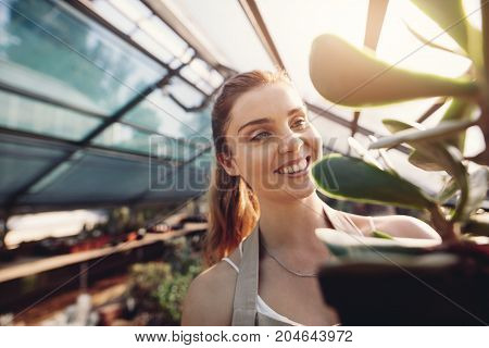 Female Worker In Greenhouse Working On Cactus Plants