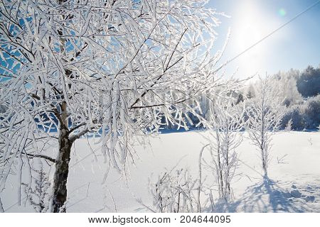 beautiful winter landscape with forestsnow and blue sky. Sunny frosty wintry day. trees covered with snow in winter forest