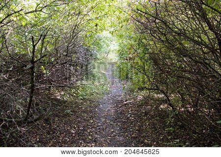 Path Hidden In A Green Bush