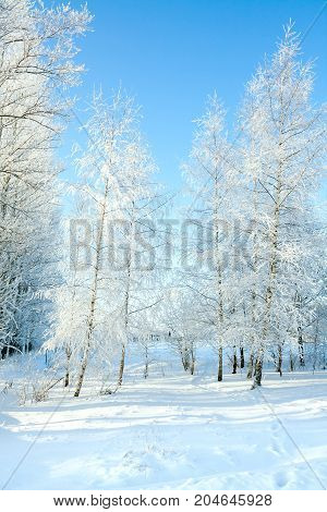 rural winter snowy landscape with forest footpath and blue sky. trees covered with snow. wintry frosty day