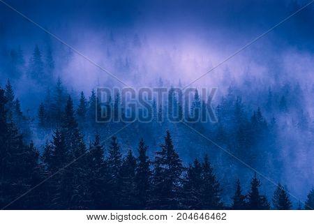 Beautiful Blue Fog In A Carpathian Misty Forest