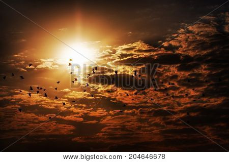 Birds against clouds and the sun. Russia