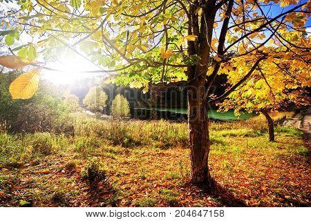 The sun shines through tree foliage on decline. Russia