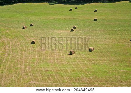 a field of rolled hay, seen from the air
