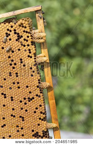 The bee hive is shot close-up in the summer on an apiary