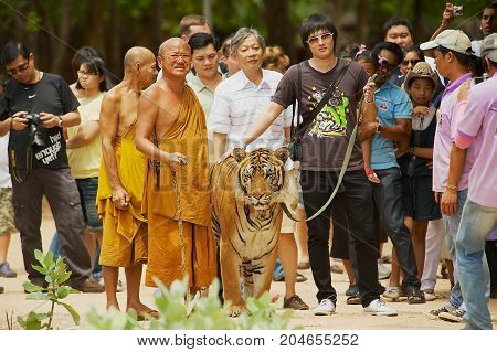 KANCHANABURI, THAILAND - MAY 23, 2009: Unidentified tourists walk with tiger handled by Abbot Phra Acharn Phoosit Khantidharo in Tiger Temple Kanchanaburi, Thailand.