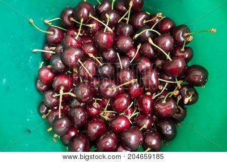 Fresh Sweet Cherries In The Green Bucket