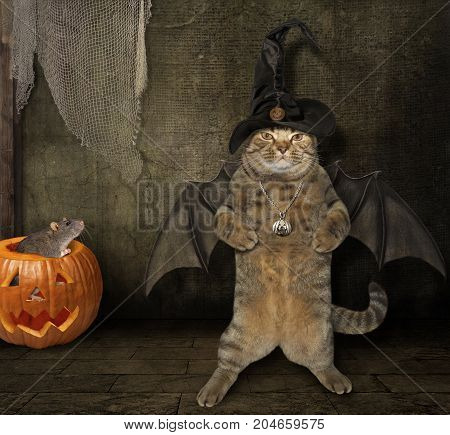 The cat with bat wings stands near the pumpkin. It's Halloween.