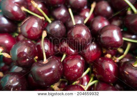 Lots Of Dark Red Fresh Sweet Cherries