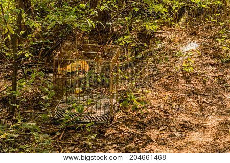Rusty Wire Square Bird Cage