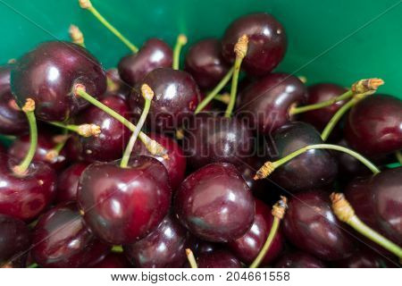 Ripe Fruits Of Sweet Cherry In Green Bucket