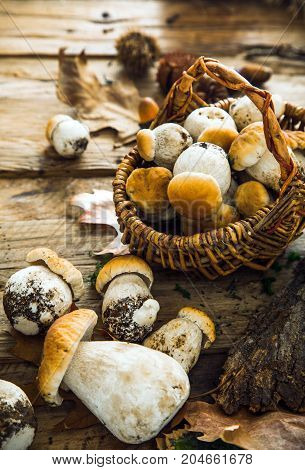 Mushroom over Wooden Background. Autumn Cep Mushrooms on wood. Autumn forest fruit