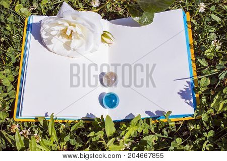An open book with empty pages top view, a white wild rose flower and a green grass and clover. Romantic concept for the artist. Copy space