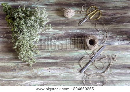 Bundles of freshly cut oregano, ropes and scissors on a wooden table close-up