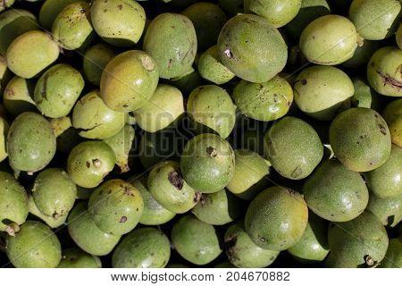 Many Green Greek Walnuts. Green Nuts In A Box. Texture Of Green Greek Nuts Background
