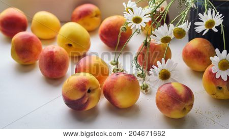 Nectarines are scattered on the windowsill near a vase with field daisies Early autumn
