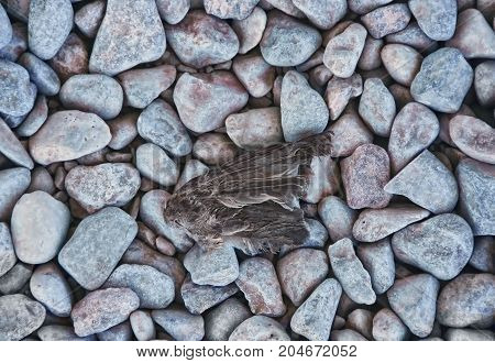 Bird's wing fallen on gravel, sign of a lost struggle
