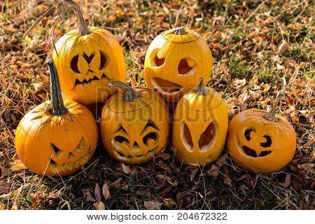 Autumn Pumpkin In Colorful Leaves Sunshine