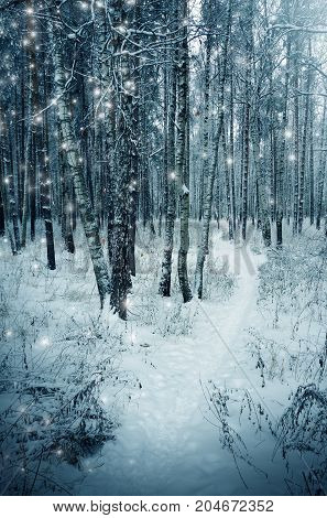 Winter nature, trees and snowstorm in forest