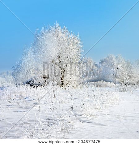 Winter nature, trees in field in sunny day