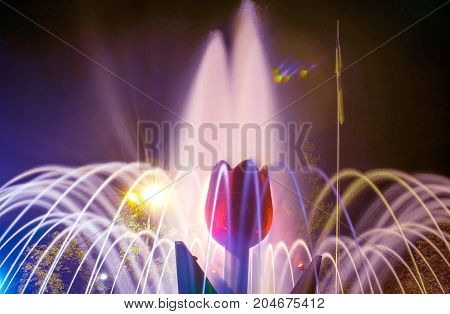 A close-up beautiful illuminated city fountain A Red Tulip Flower at night