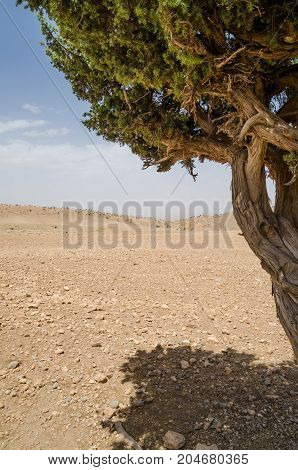 Framed view of single dry tree in Atlas Mountains in Morocco, North Africa.