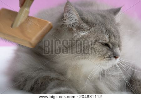 Brush The Cat Fur Comb On A Wooden Table