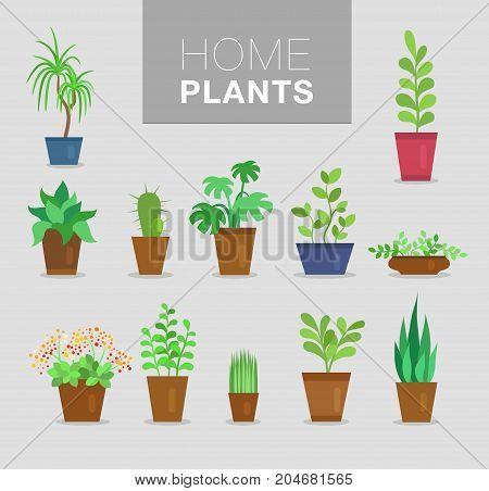 flat home plants vector set, botanical background